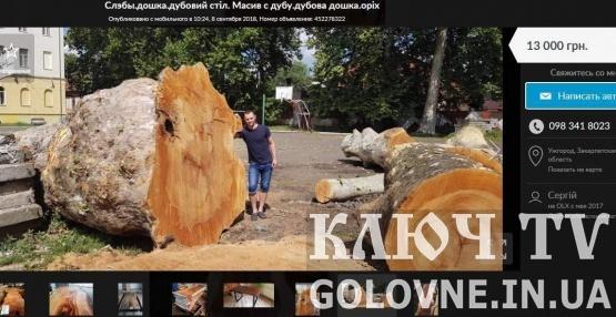 Як продають вирізану цінну деревину Мукачева. Фото