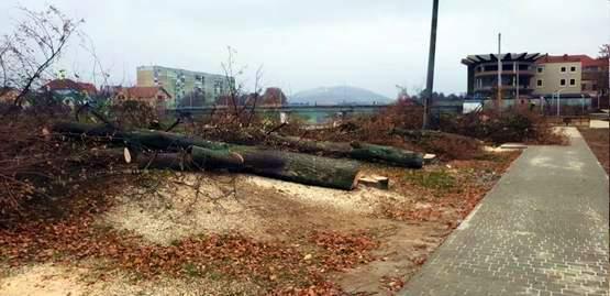 рубка здорових дерев Мукачево 1